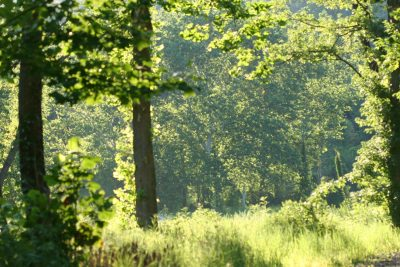 Forest Bathing- August 26